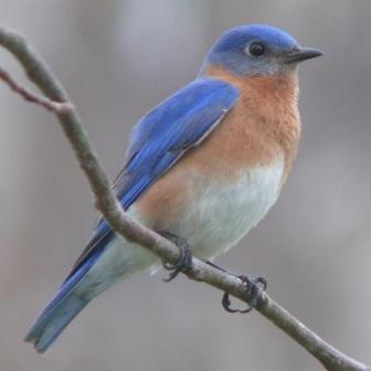 bluebird quotes