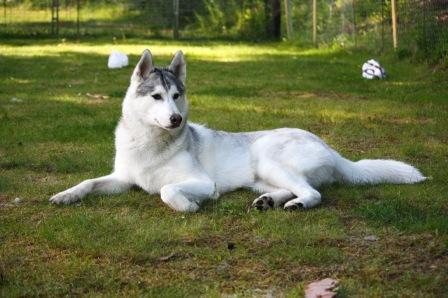 dog - get pet insurance